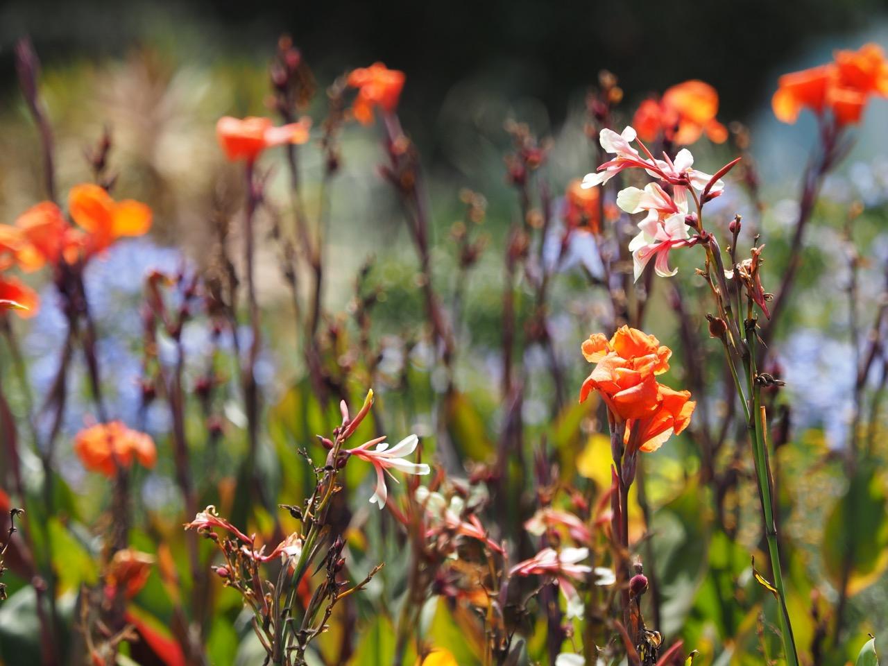 Fleurs de Rancourt