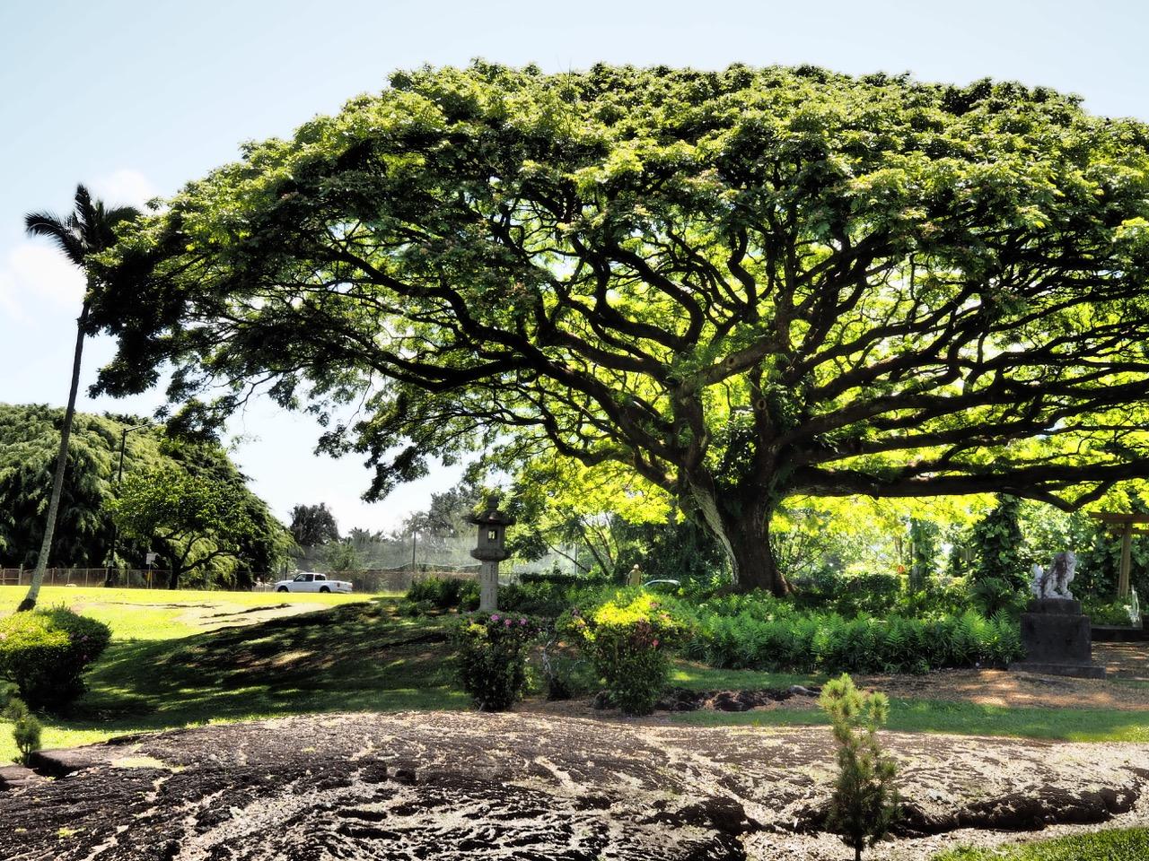 Nature à Hawaii