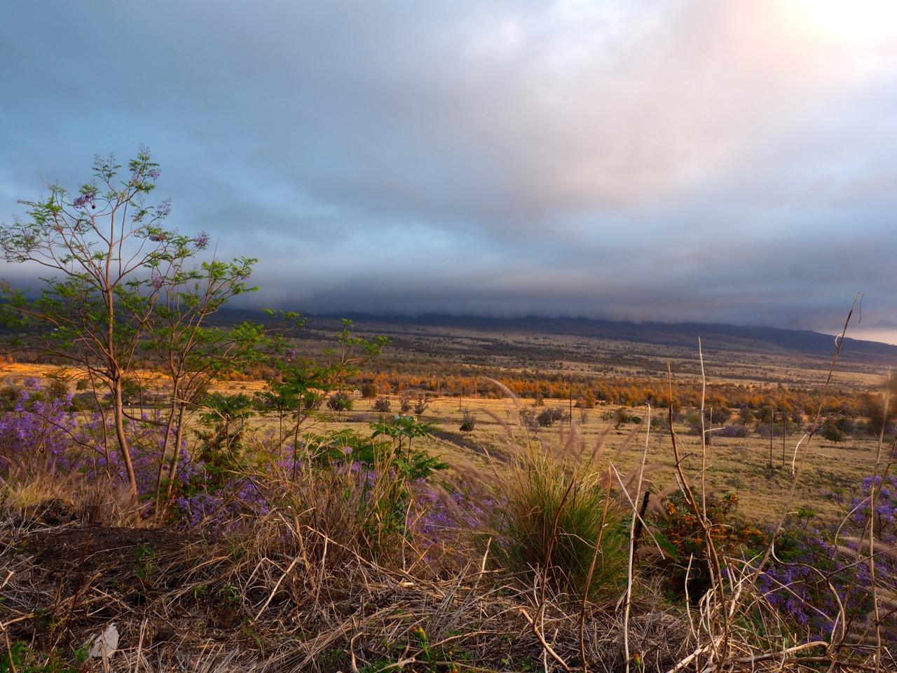 Sur la Big Island entre Hilo et Kona