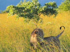 Le Réveillon Golfissimes au Kenya et en Tanzanie !