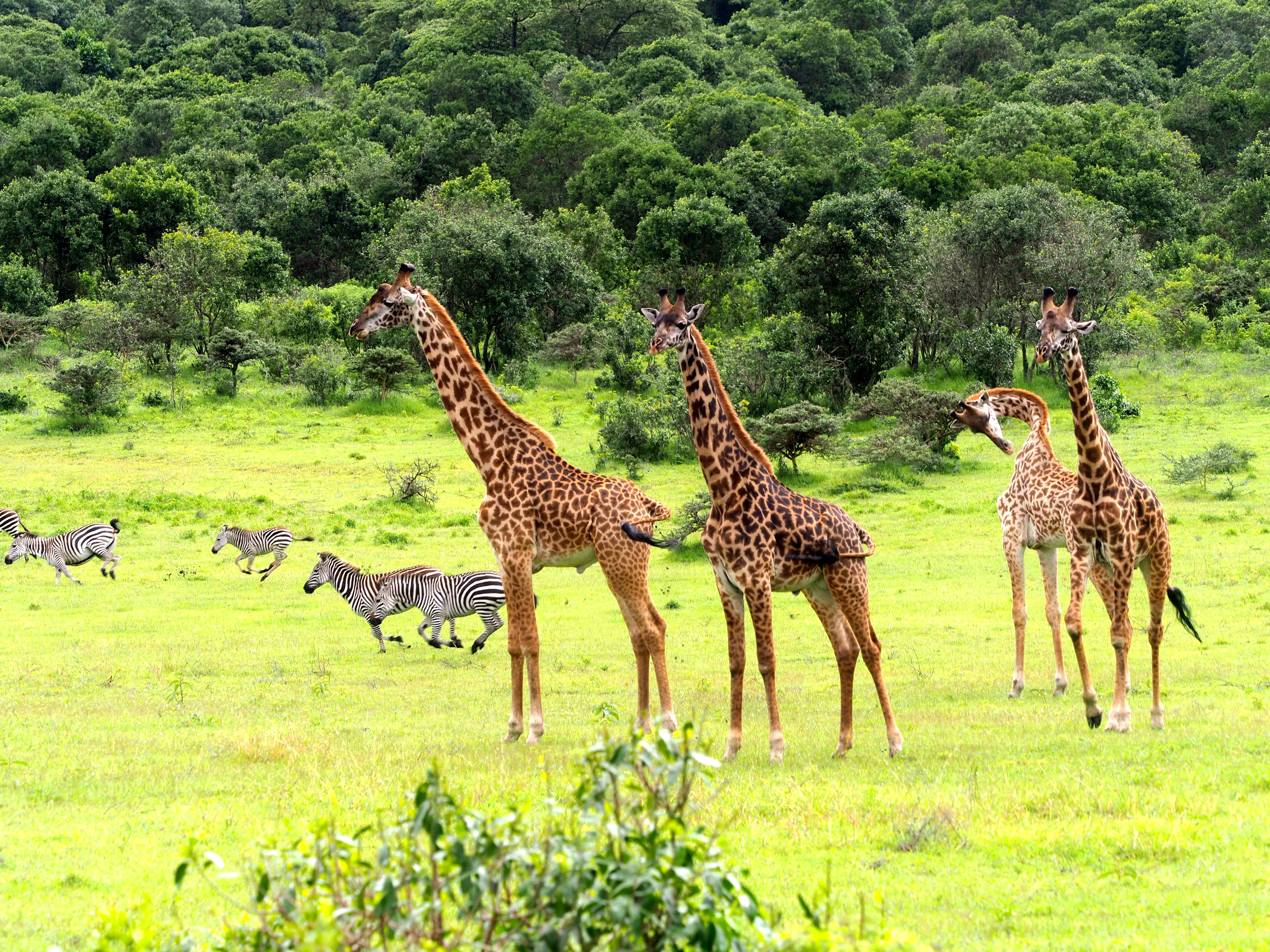 Scène du Arusha National Park